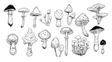 Set Of Mushrooms. Outline With Transparent Background. Vector Sketch Illustration