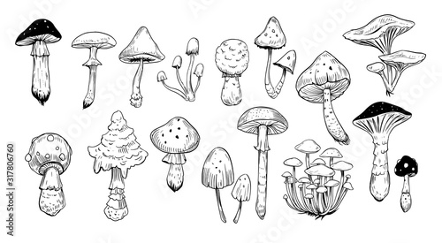 Fotografia Set of mushrooms