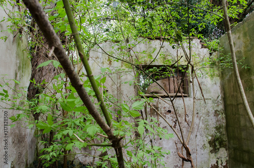 Interior of ruined house invaded by wild plants Fototapeta