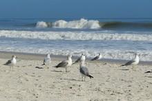 Seagulls On Ocean Shore