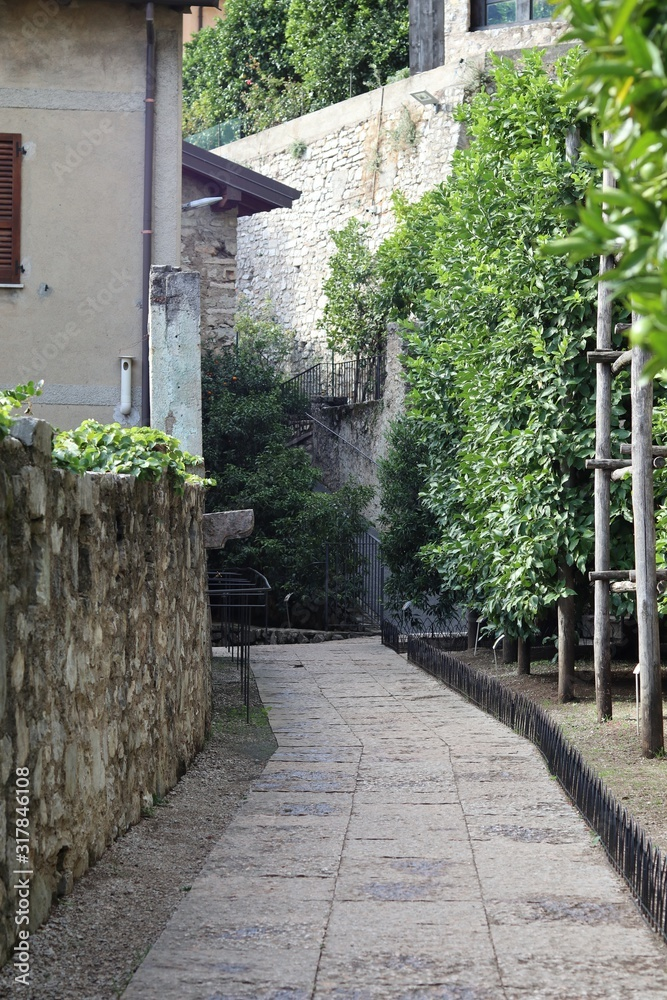 Vertical shot of an alleyway with green plants and walls on the sides