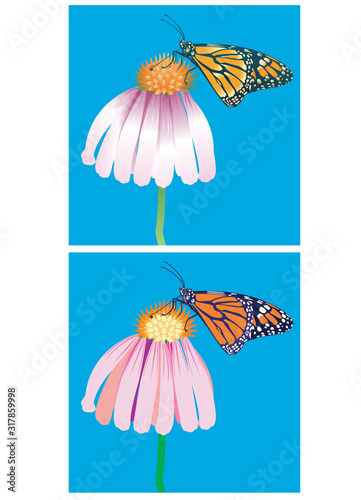 Photo Monarch Butterfly Set 1