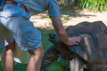 Zoo Keeper Pats A Giant Turtle...