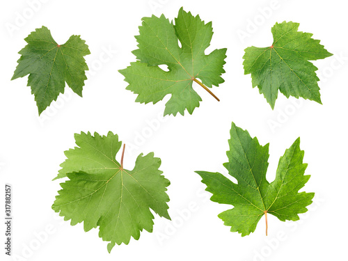 Obraz Grape leaves for decorate or background isolated on white - fototapety do salonu