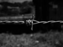 Barbed Wire 1957