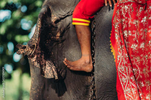 Photo Details of elephant on chains