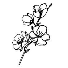Digital Illustration Of A Cute Black Contour Doodle Spring Theme Sakura Flower Twig. Print For Clothes, Poster, Banner, Postcard, Web Design, Coloring.