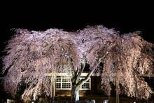 廃校と夜桜の幻想的な...