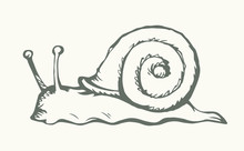 A Snail Creeps On The Ground. Vector Drawing