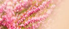 Bannière Fleurs De Bruyère