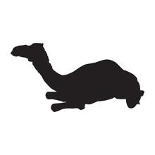 Arabian Camel Dromedary Silhouette Vector Isolated Illustration