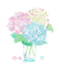 Illustration Of Hydrangea Hand Painting With Watercolor