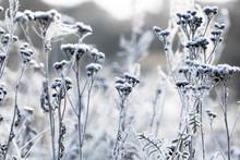 Beautiful Frozen Latvian Flowe...