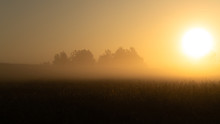 Beautiful Sunrise Over The Corn Field. First Sunny Rays. Misty Morning In A Cornfield. Quiet, Autumn Sunrise Over The Field.