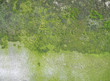 weathered concrete wall with green moss background