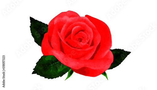 vector rose with green leafs