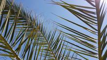 Palm Leaves On Blue Sky Backgr...