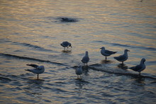 Seagulls And A Sunset At St Kilkda, Melbourne