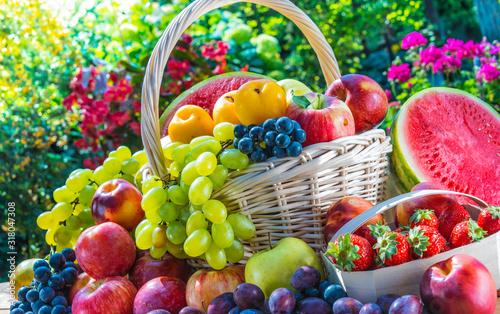 Fototapeta Variety of fresh ripe fruits in the garden. obraz