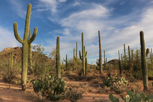 Saguaro National Park Landscap...