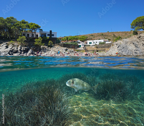 Mediterranean sea coastline, rocky beach with tourists in summer and fish with seagrass underwater, split view over and under water surface, Spain, Costa Brava, Catalonia, Cadaques #318059387