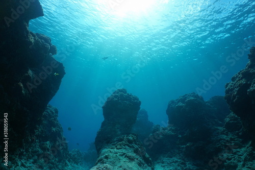 Underwater seascape, rocky reef on the ocean floor with sunshine through water surface, natural scene, Pacific ocean, French Polynesia #318059543