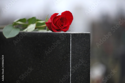 Fotografia Red rose on black granite tombstone outdoors. Funeral ceremony