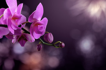 Fototapeta na wymiar orchid flower on a blurred purple background. valentine greeting card. love and passion concept. beautiful romantic floral composition.
