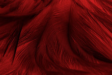 Full Frame Shot Of Red Feathers