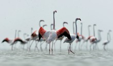 Flamingoes At Beach Against Clear Sky