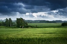 Green Field And Forest In The ...