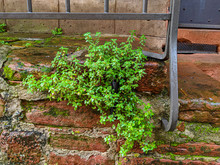 Red Sand Stone Wall With Moss
