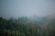 Misty Foggy Morning View Of Pacific Northwest Forest Along Coastline