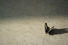 Light Of Butterfly