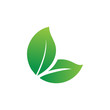leaf logo design for health and organic company.vector design template element