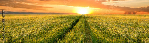 Fotomurales - Bright sunset sky with cumulus over a grain field. Rural summer landscape. Beauty nature, agriculture and seasonal harvest time. Panoramic banner.