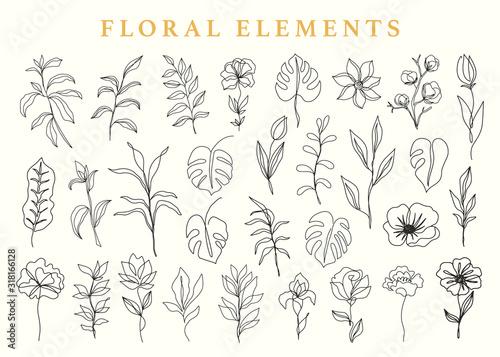 Floral elements set, botanical drawings Canvas