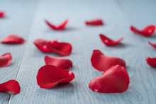 Red Rose Petals On Blue Wood B...