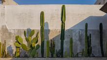 Cactus Against A Concrete Wal...