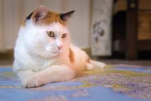 Beautiful Cat Sitting On The World Map