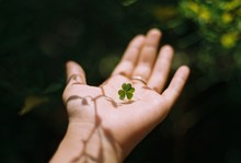 Cropped Image Of Hand With Four Leaf Clover