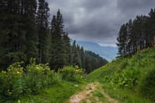 Path In A Mountain Forest In S...