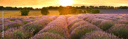 Fototapeta Lavender field at sunset in Provence, France obraz