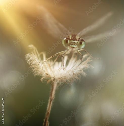 anisoptera, insecto, naturaleza, macro, animal, bragueta, bicho, verde, close-up Canvas Print