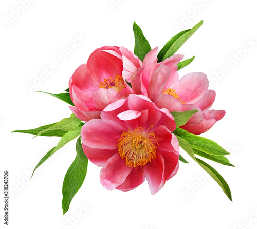 Three coral peony flowers with green leaves Wall mural