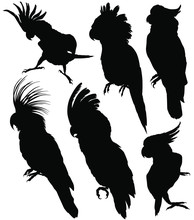 Cockatoo / Parrots Silhouettes...