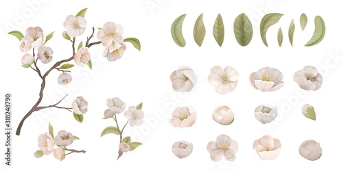 Cherry Flower Set Isolate on White Background. Realistic Sakura Blossom, Green Leaves and Branches, Design Elements for Graphic Design Printable Banner, Poster or Flyer Decoration. Vector Illustration