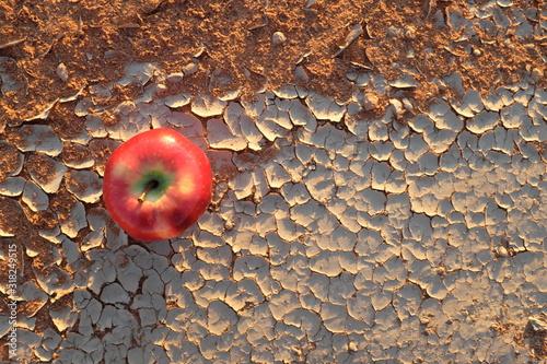 An apple on a dry and cracked desert soil Fototapeta