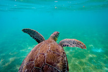 Close-Up Of Sea Turtle Shell Under Water
