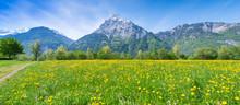 Swiss Meadows.